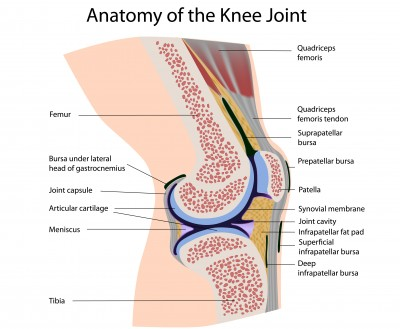 Meniscus Injuries Ace Physical Therapy And Sports Medicine Institute
