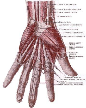 hand_diagram